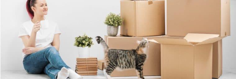Attitudes pendant déménagement du chat