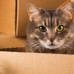 déménagement d'un chat