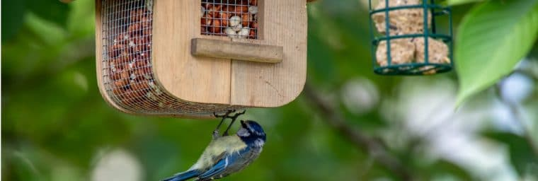 maisons pour oiseaux