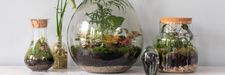 terrariums amenages