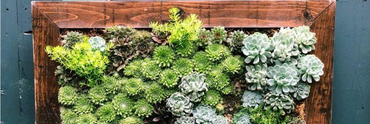 plantes de jardin DIY